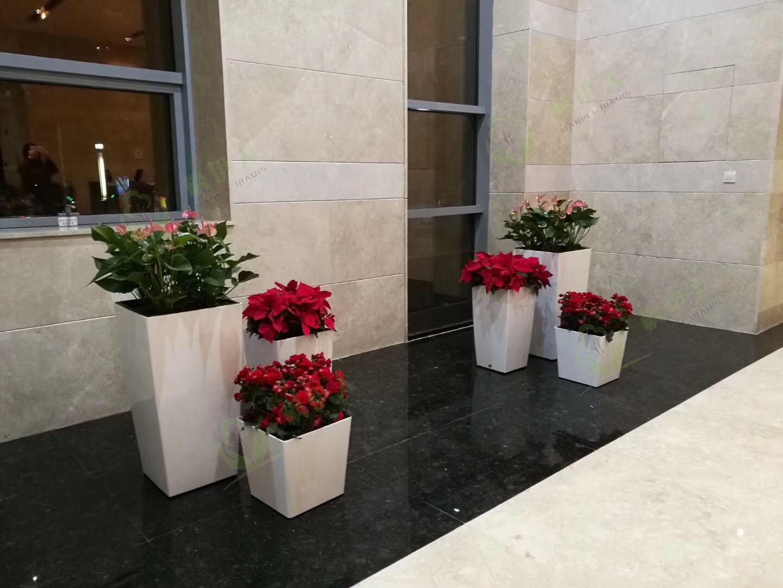 貴陽租擺花卉