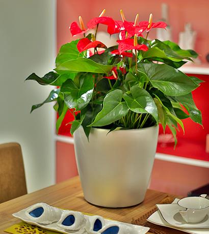貴州綠植銷售