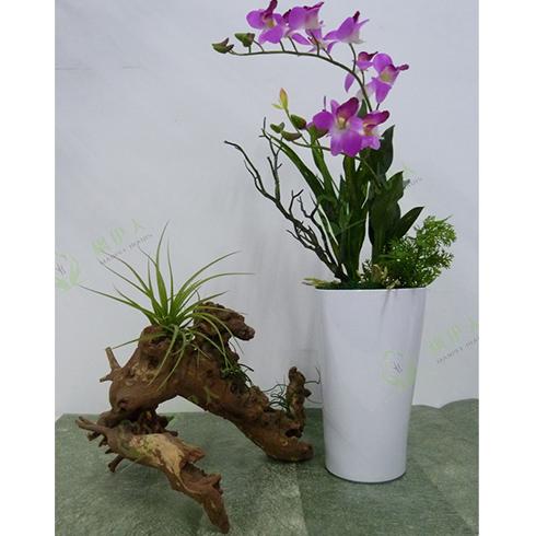 花卉租賃價格