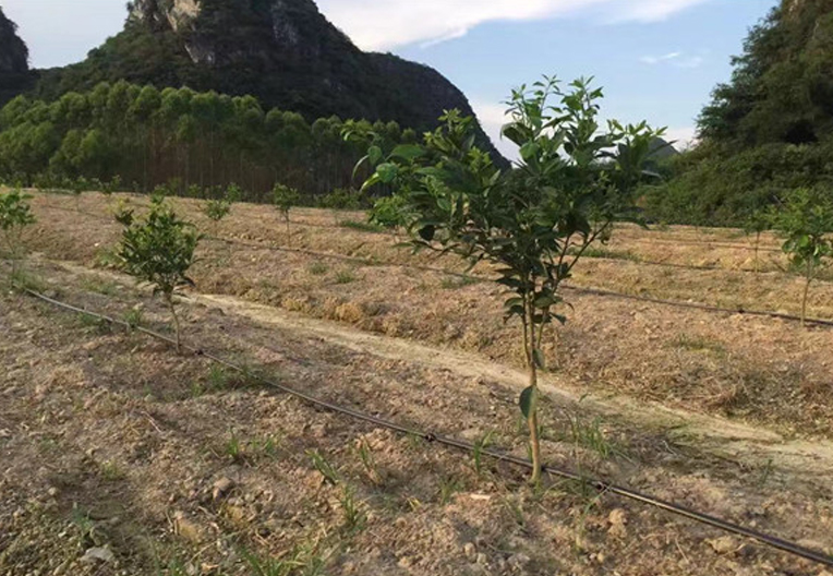 橘子灌溉工程