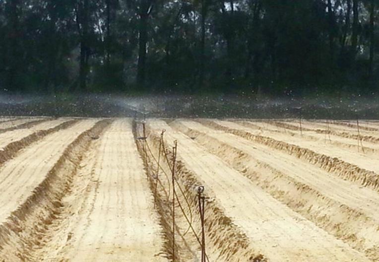 胡蘿卜灌溉工程