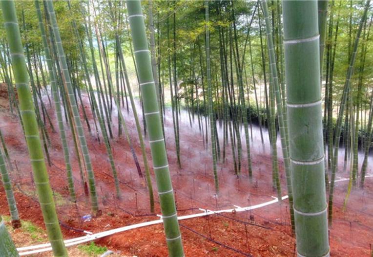 林下灌溉工程