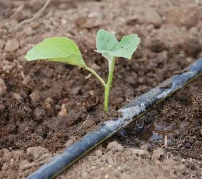 福州灌溉技术