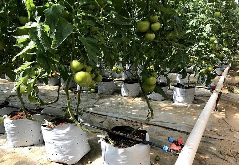 果蔬灌溉设备