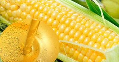 玉米提胚的方法