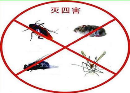 蟑螂有着怎样的危害