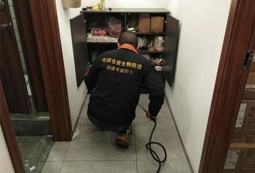重庆家庭灭蟑螂