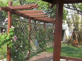 庭院葡萄架