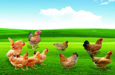 众博牧业对富海360产品评价