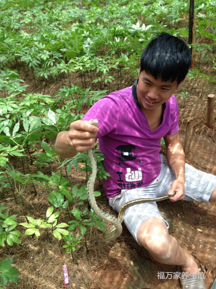 四年文山三七花种植环境