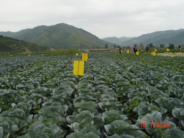 这里有原生态的无公害蔬菜