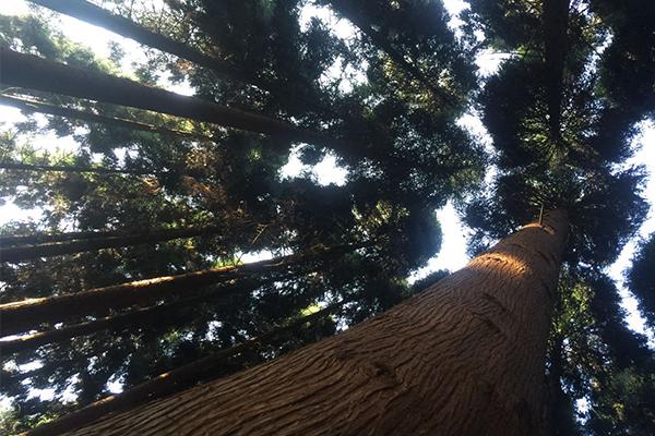 文家寨树木