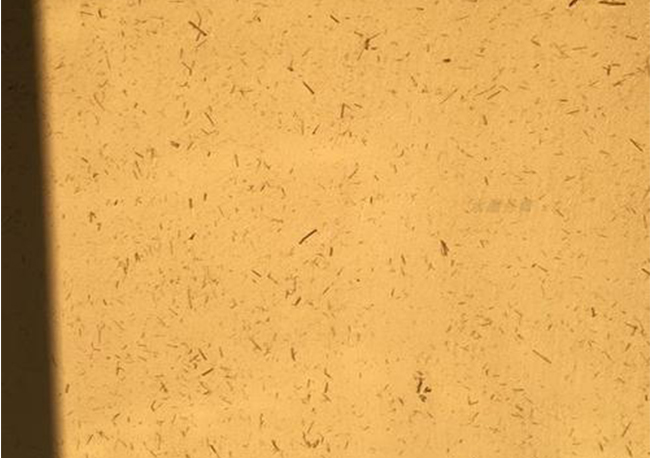 福州稻草硅藻泥