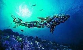 用数字直观展示人类给海洋带来的垃圾竟是这样触目惊心!
