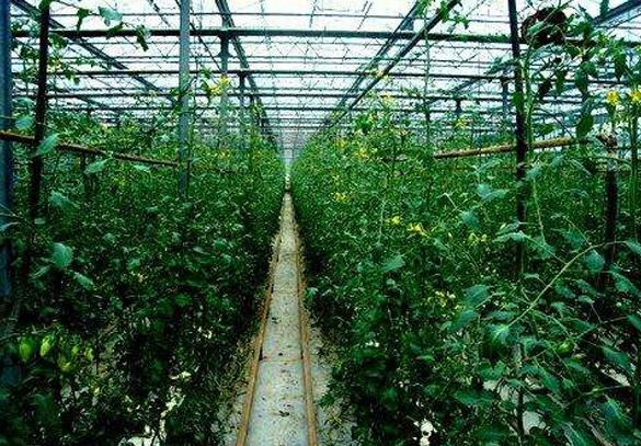 暖棚蔬果种植