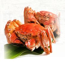 固城湖大閘蟹怎么能吃到正宗的