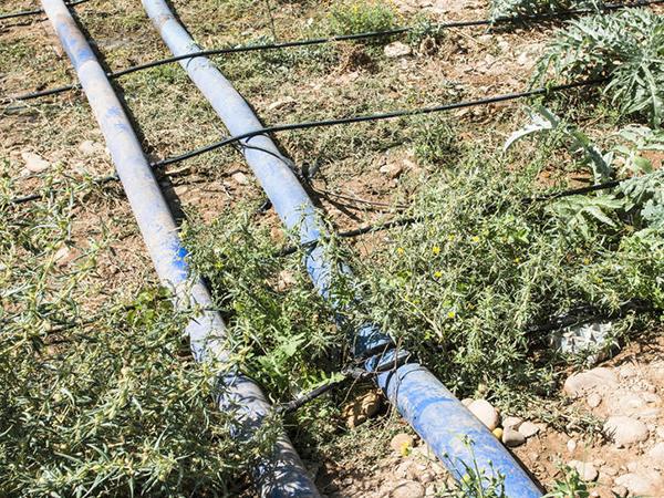 沙漠治理滴管系統