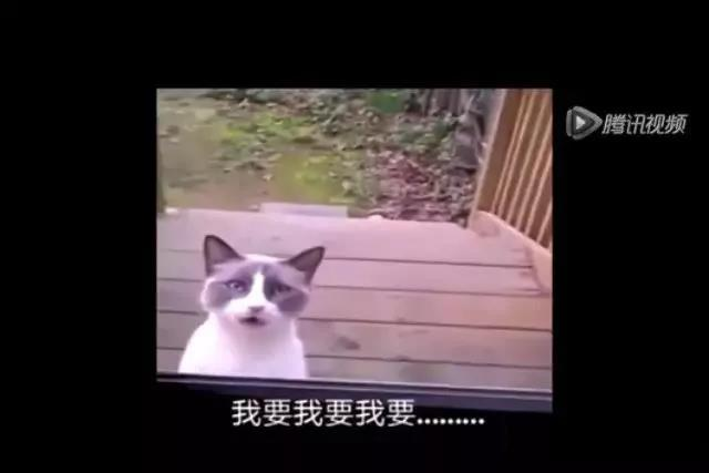 会说中国话的猫