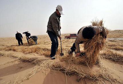 沙漠生態治理