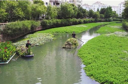 河道生態治理