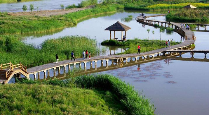 濕地公園建設