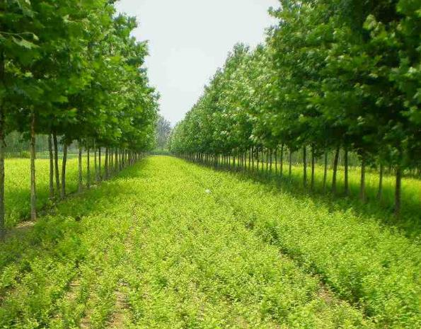 四月園林苗木如何養護
