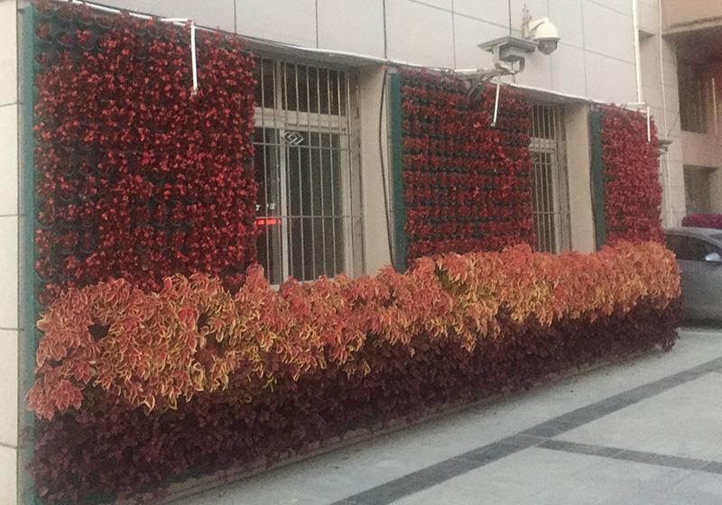 室外垂直綠化