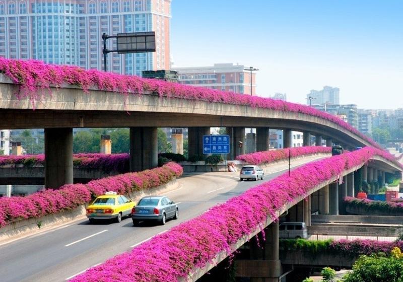 橋梁垂直綠化