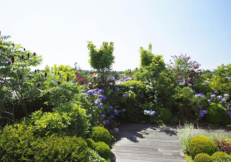 蘭州花園設計公司分享花木枯死的原因及預防