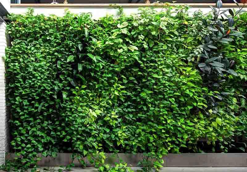 垂直綠化植物墻