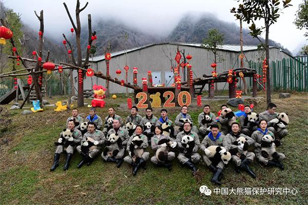 熊猫宝宝贺新春,甘肃启航公司恭祝大家新年快乐