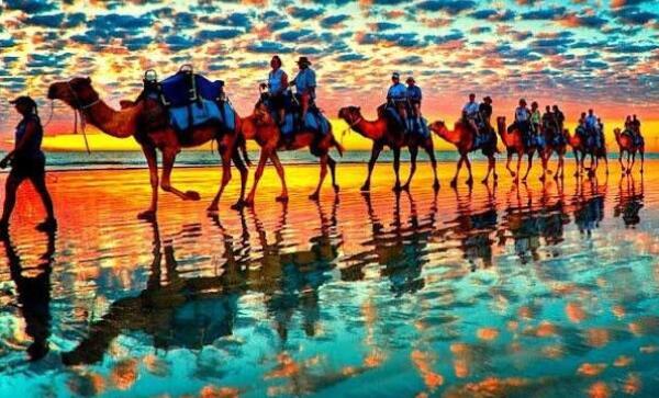 南澳大利亚州专业枪手从空中射杀逾万头野骆驼,甘肃房屋拆除厂家为您带来详细报道.