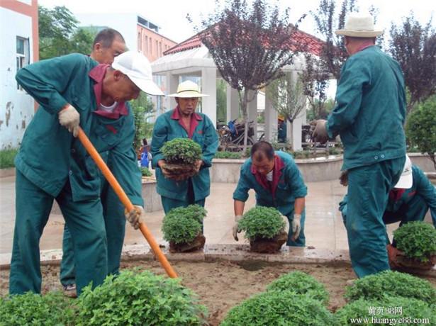 小区园林绿化