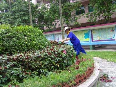 学校园林绿化