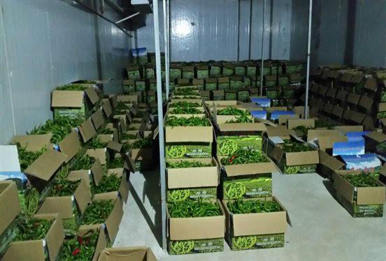 定西果蔬保鲜冷库厂家为你解惑——为什么小型果蔬保鲜冷库更受欢迎