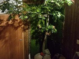 室内仿真枫树林