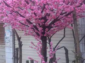 贵阳仿真树