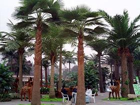 酒店景观选择仿真棕榈树,时尚美观