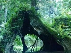 仿真石榴树盆景