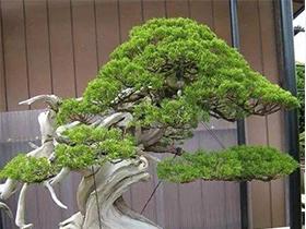 仿真花藤树盆景