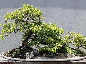 仿真海葵树盆景