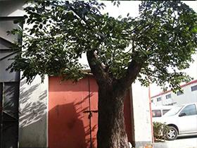 仿真水泥树
