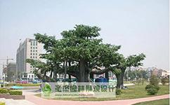 榕树工程图
