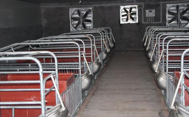 贵州养殖设备厂家告诉你养猪场中需要哪些设备