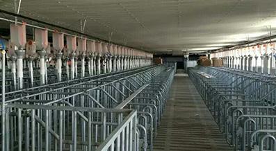 贵州养殖设备:双体复合仔猪保育床配置及尺寸