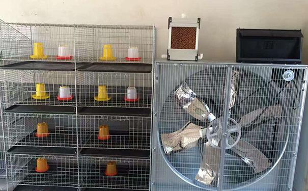 贵州养鸡设备