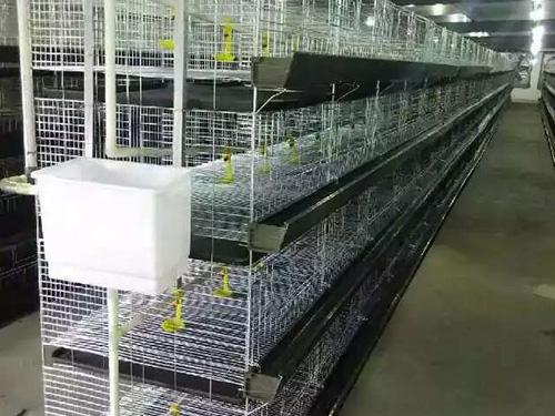 贵州养鸡设备厂家