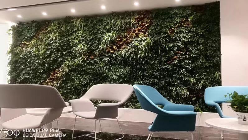 广州绿植墙