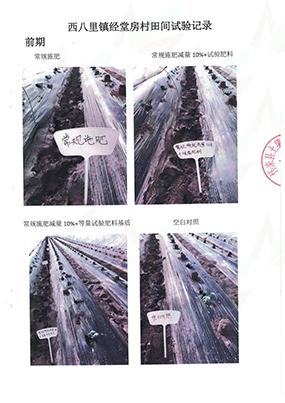 6-2 生物有机肥试验报告图片(经堂房村)
