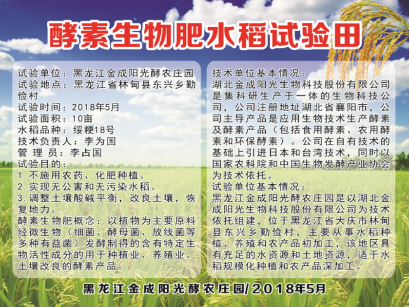 酵素生物肥水水稻試驗田
